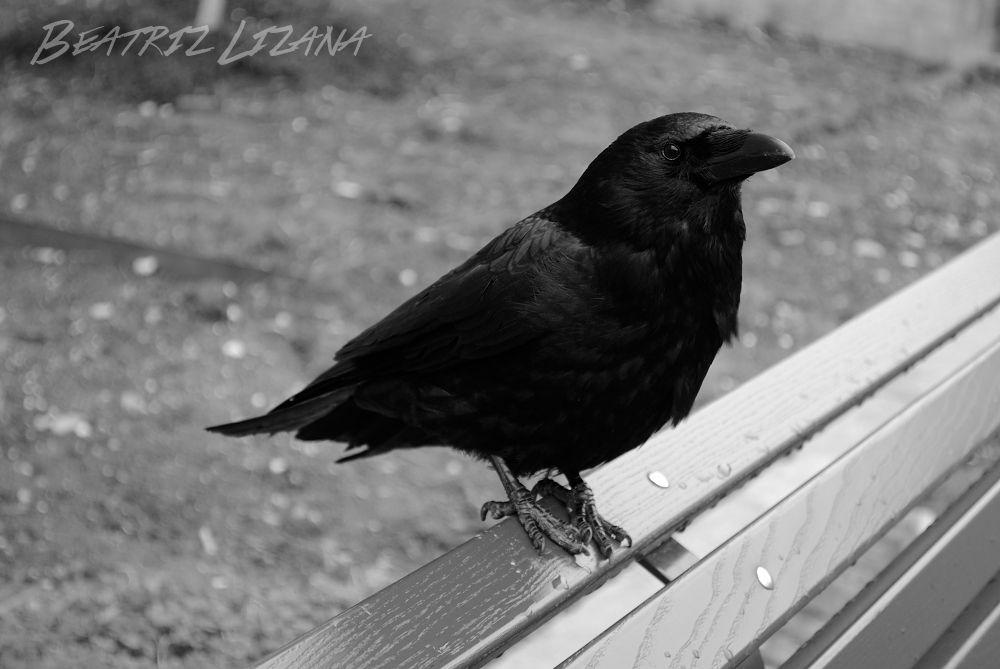 El cuervo de Ginebra, un relato para tirarse de los pelos