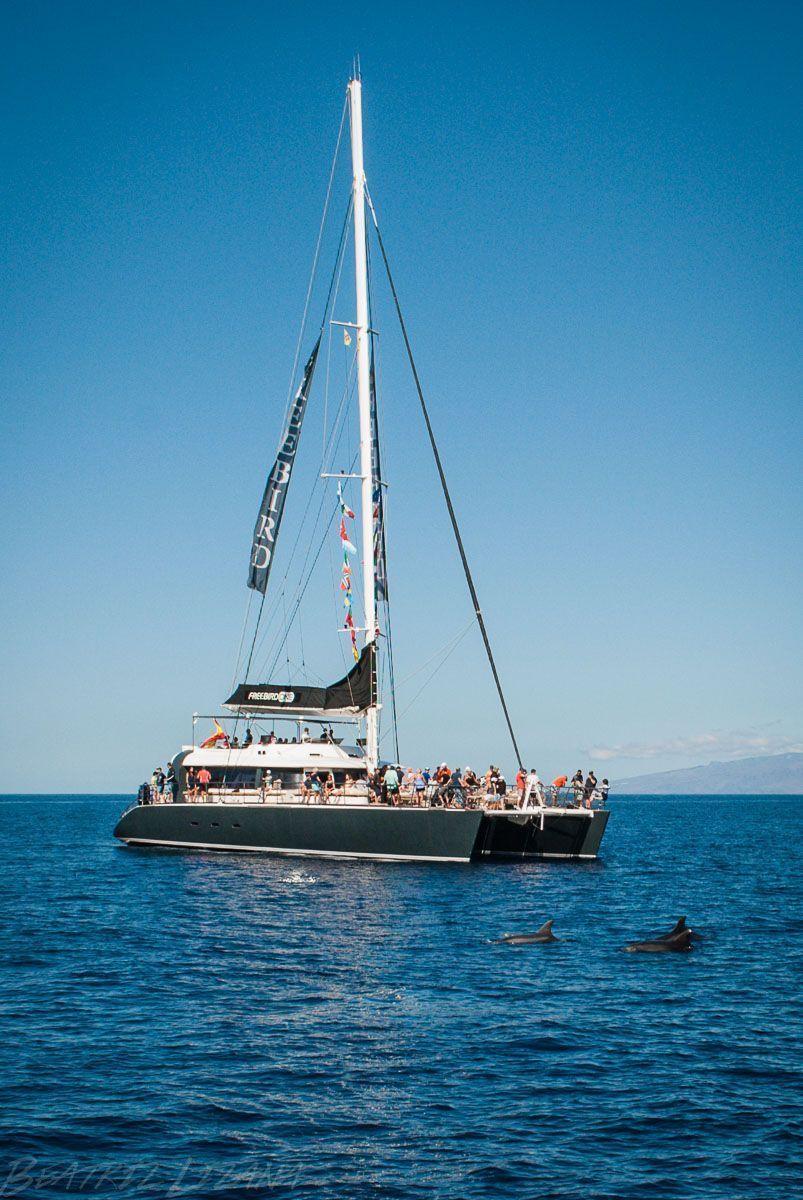 en un catamarán mirando delfines