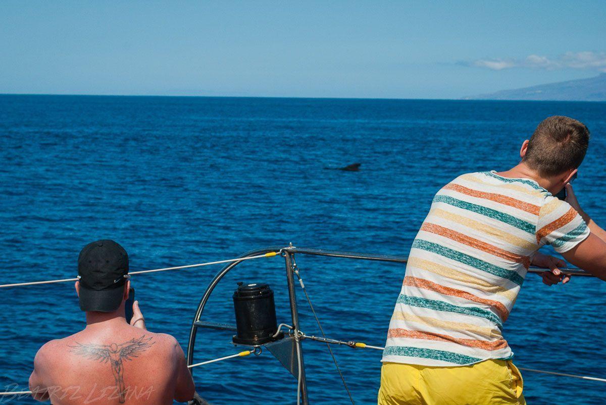 fotografiando cetáceos
